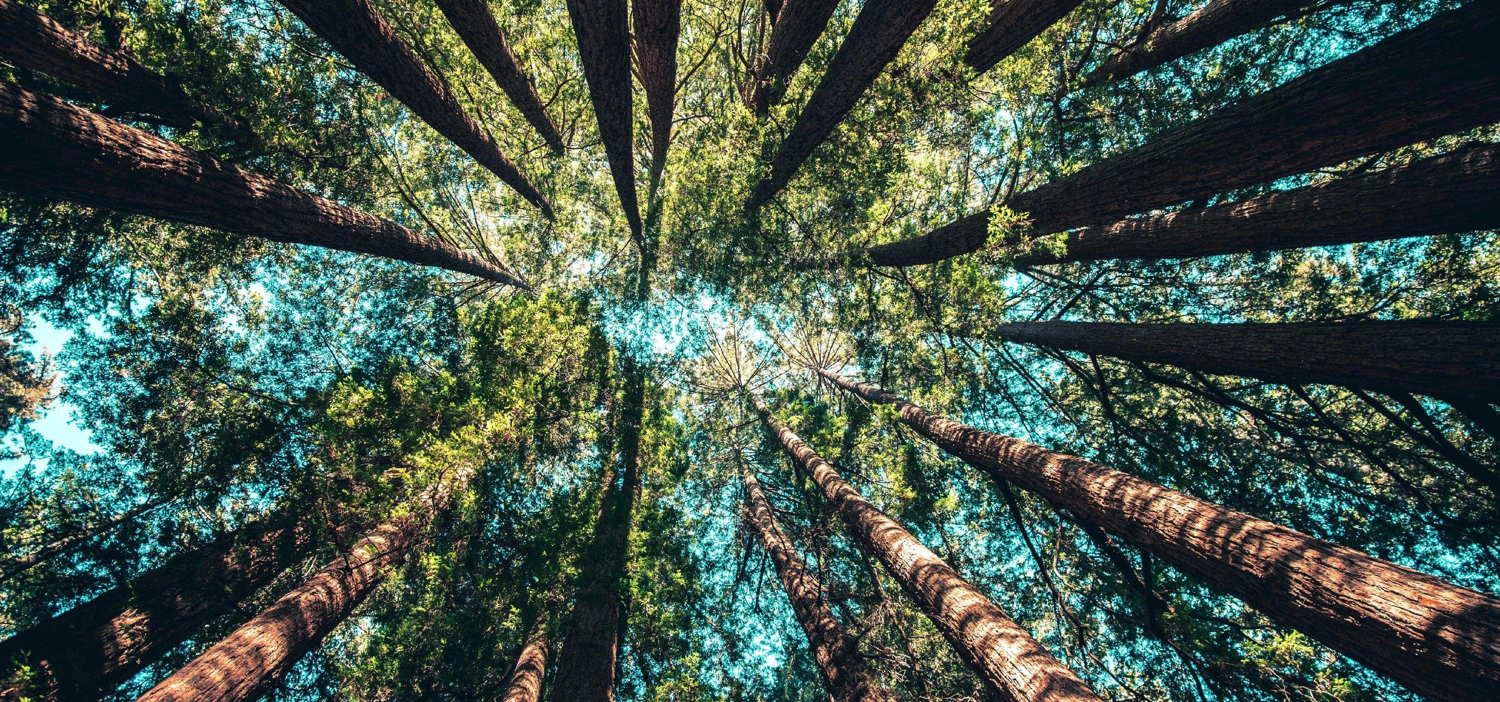 Forest-Related Solutions for Sustainable Development